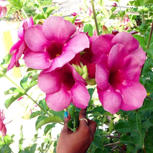 flowers-grenada
